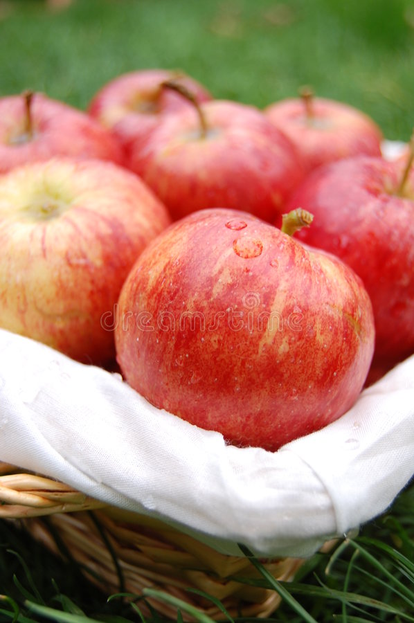 Download Apples stock image. Image of grass, rustic, apples, ground - 7074707