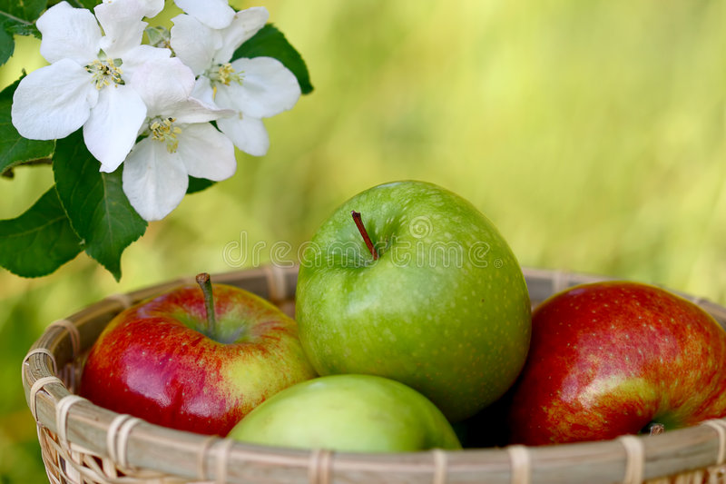 Download Apples stock photo. Image of market, iron, healthy, diet - 9219680