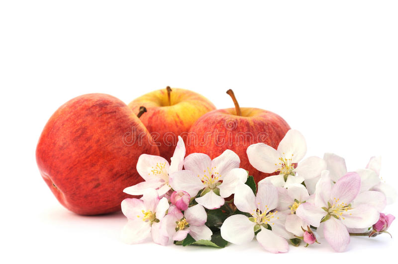 Download Apples And Apple-tree Blossoms Stock Photo - Image: 11638408