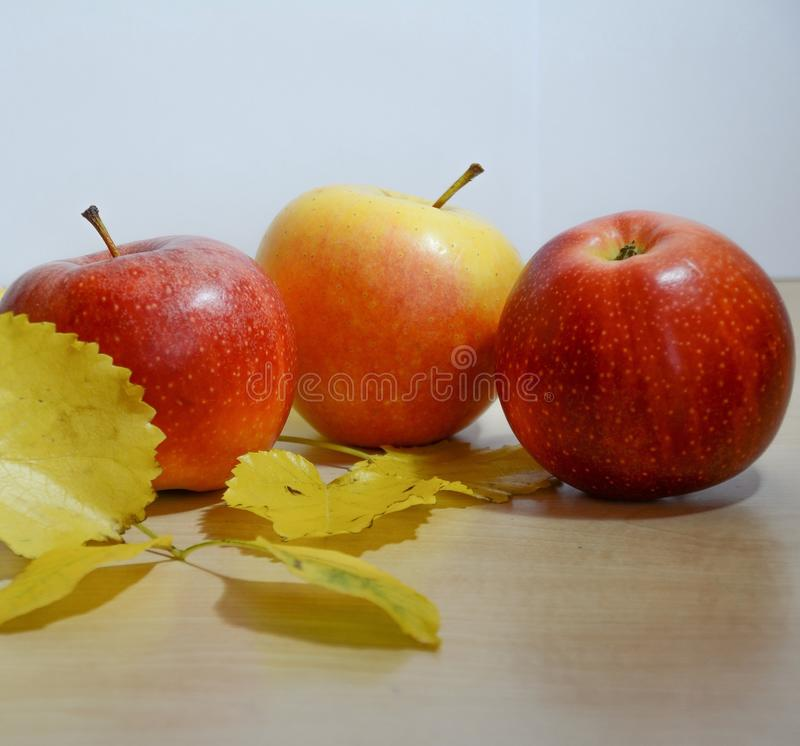Apples. Autumn gifts from a garden stock images