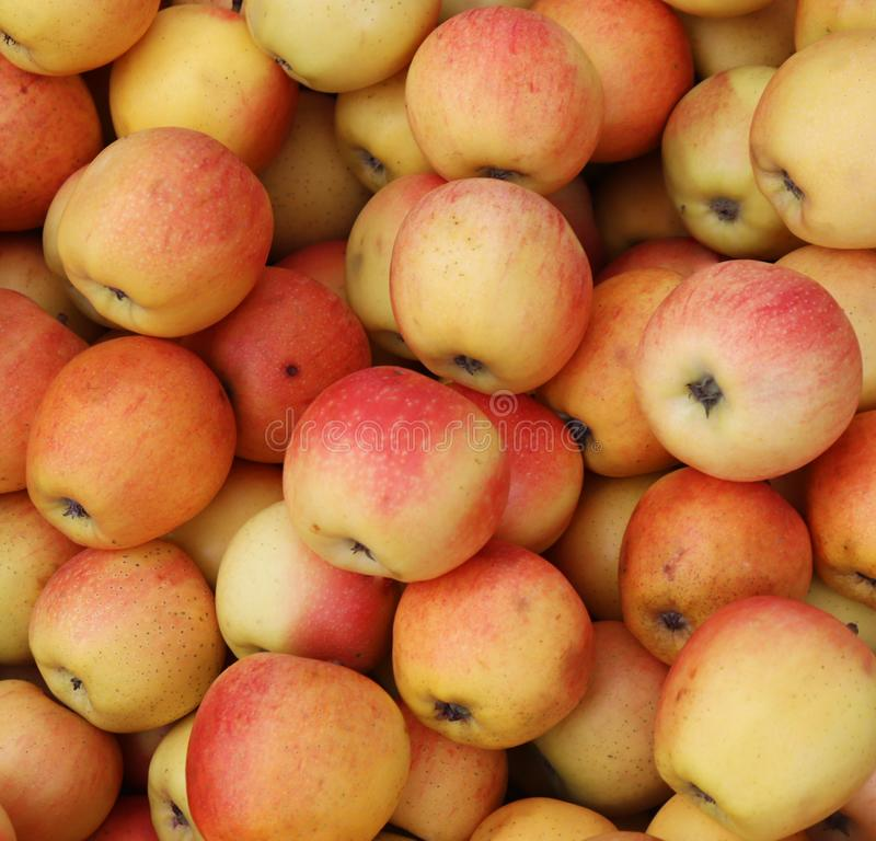 Apples background. Fresh red and yellow apples texture.  stock photography
