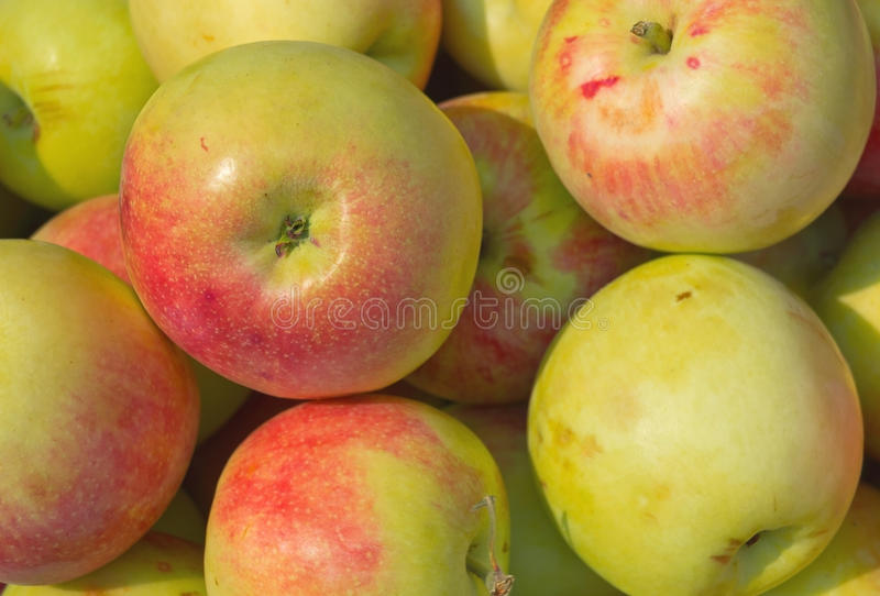 Download Apples background stock image. Image of close, grow, health - 33140891