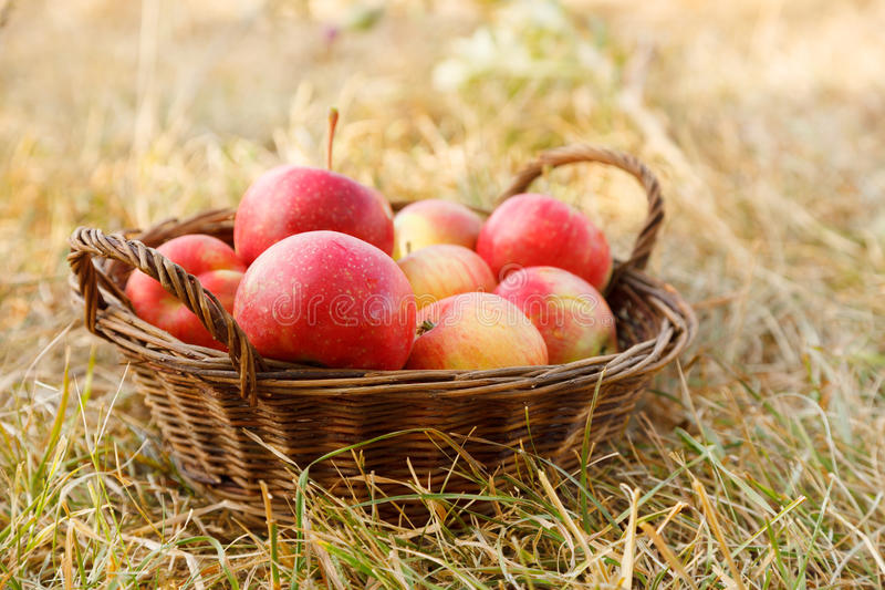 Download Apples in basket stock image. Image of freshness, harvest - 26743125
