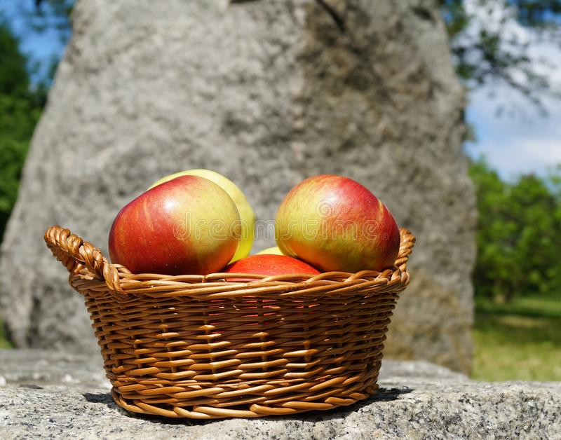 Download Apples in a basket stock photo. Image of food, knit, countryside - 41308404