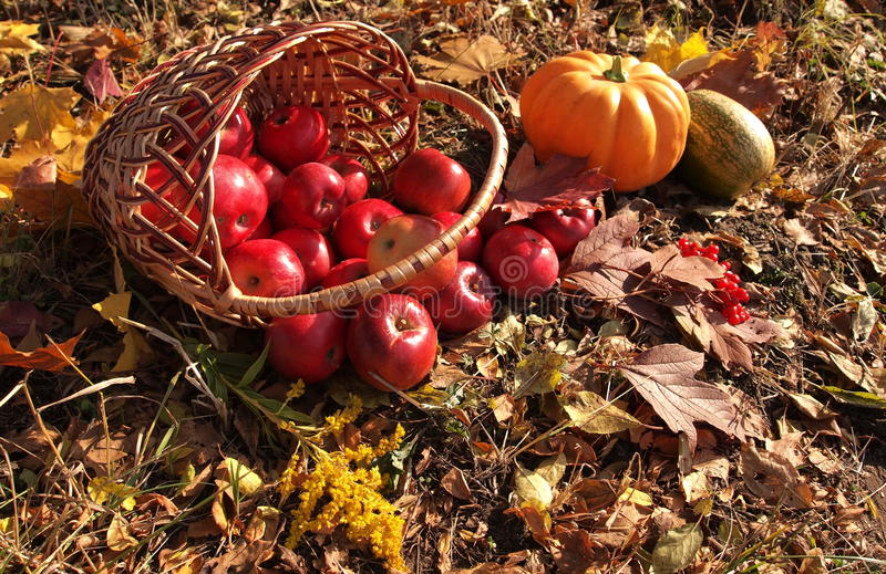 Apples in basket and pumpkin stock images