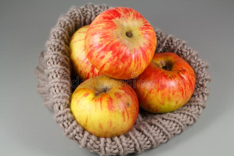 Apples in a beanie. Yellow and red apples in a beige beanie after harvest stock image