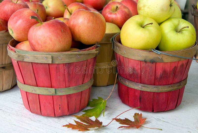 Apples in bushel baskets. Variety of Michigan apples in red bushel baskets with fall leaves royalty free stock image