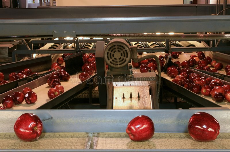 Apples on Conveyor Belt stock images