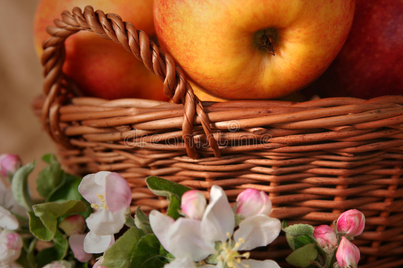 Apples and flowers stock photo