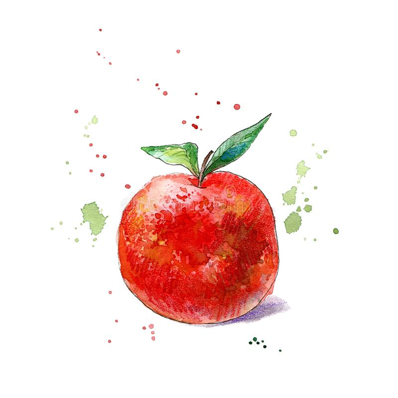 Apples fruit.Food picture.Watercolor royalty free stock images