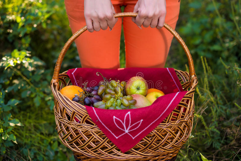 Apples and grapes basket, holded by woman hands. Fruits in the basket, holded by woman hands stock photo