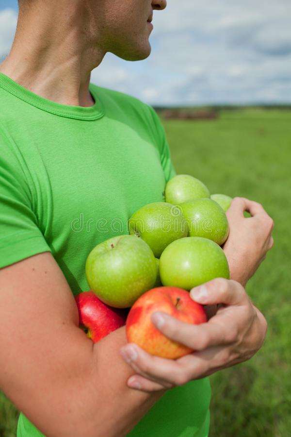 Apples in the hands of a strong guy stock photos