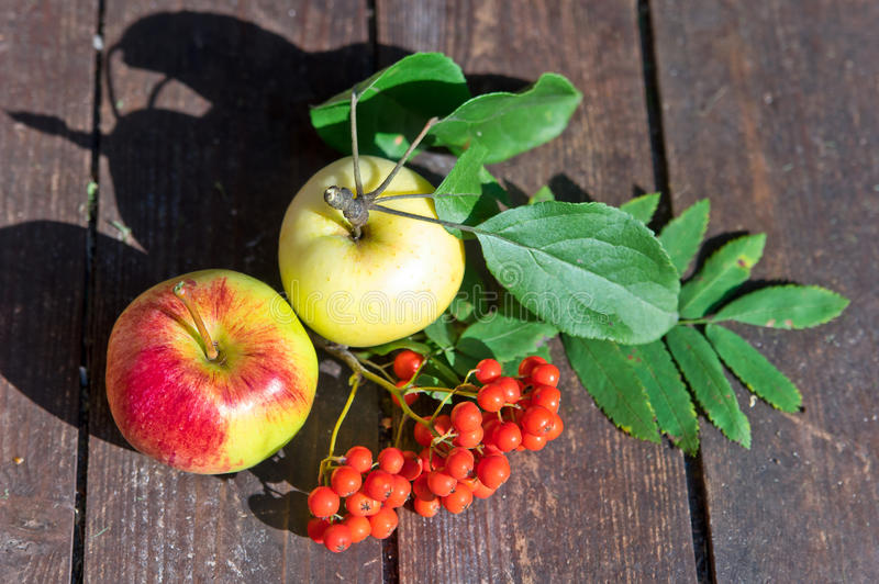 Apples and mountain ash. On wooden board stock photo