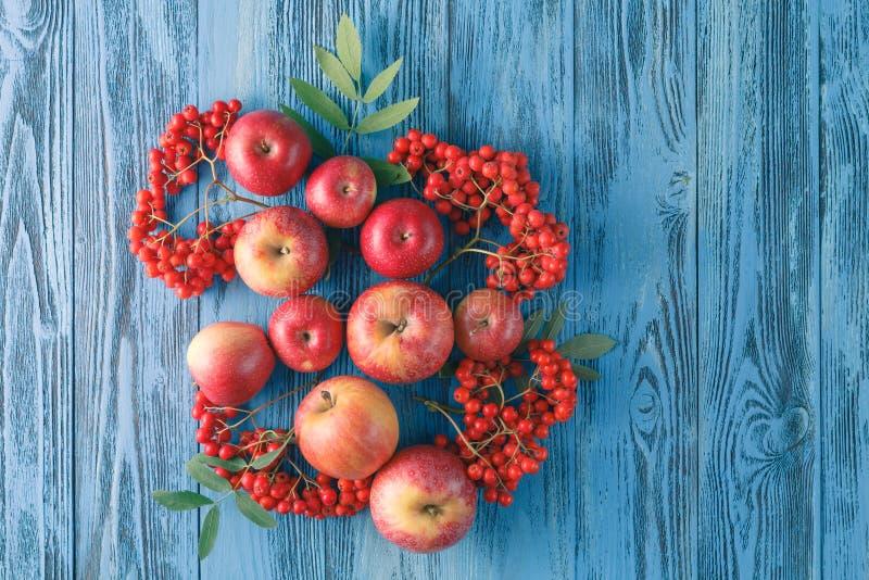 Apples and rowan berry. Autumn still life. stock photo