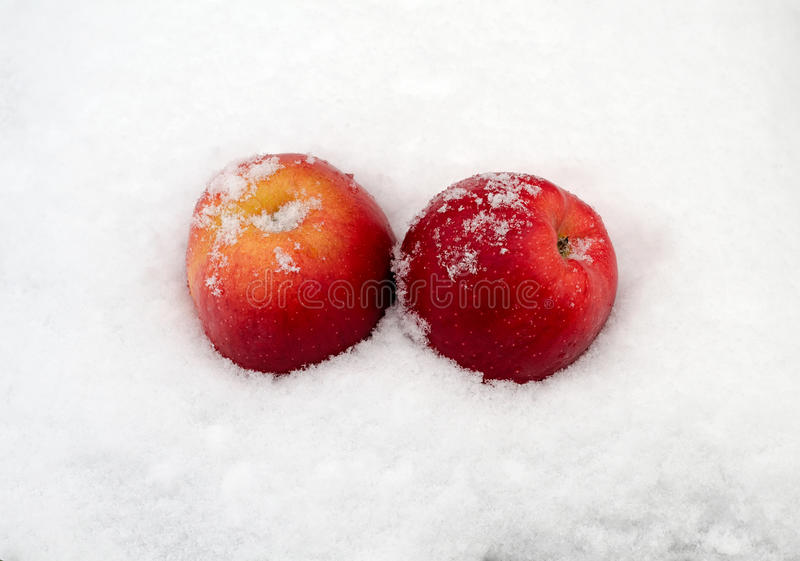 Apples on snow royalty free stock photography