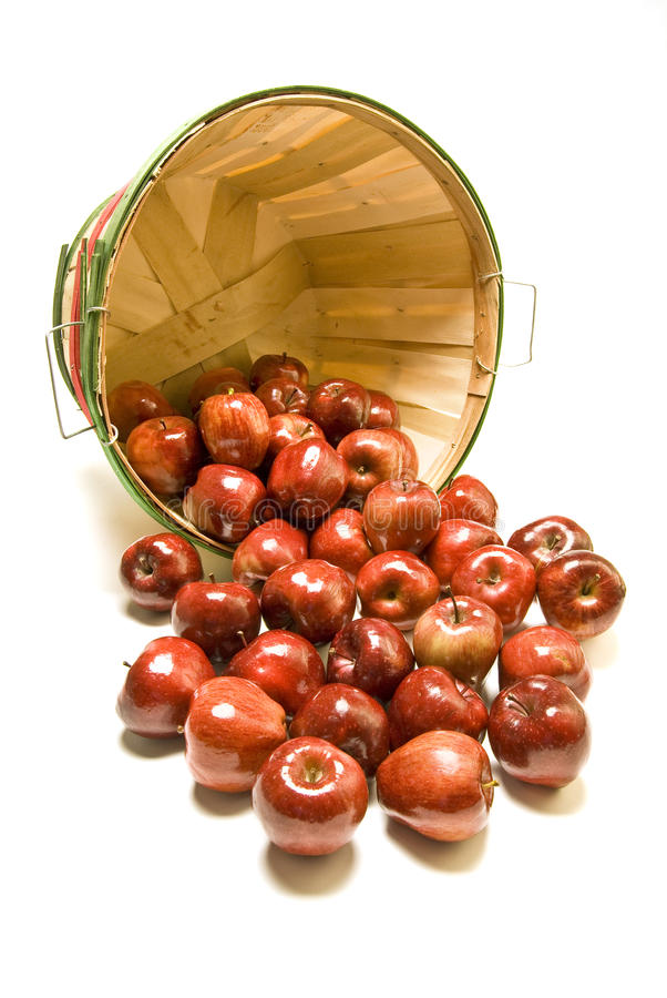 Bushel basket of red apples royalty free stock photo