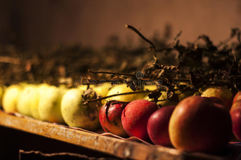 Apples storage. An apple storage in a cellar royalty free stock photo