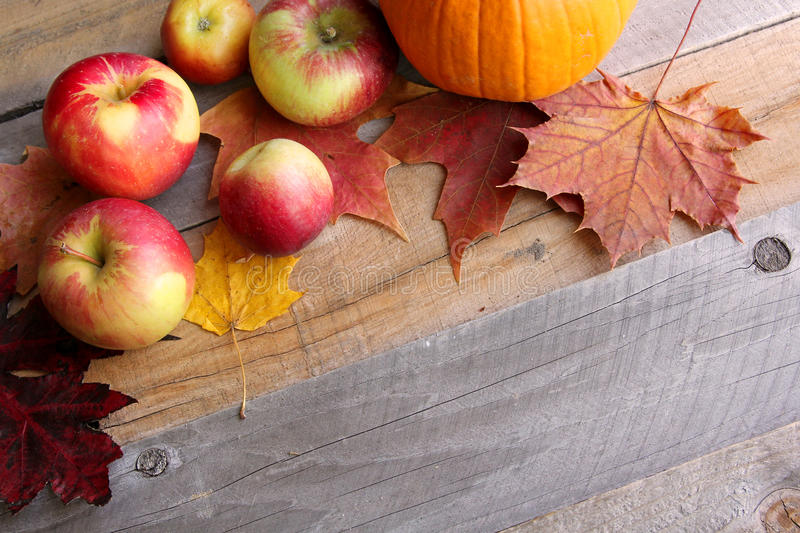 Apples and Sugar Maple Leaves Bordering Rustic Wood Background. Red Apples and Fall Sugar Maple Leaves are framing the corner of a rustic wood plank background stock image