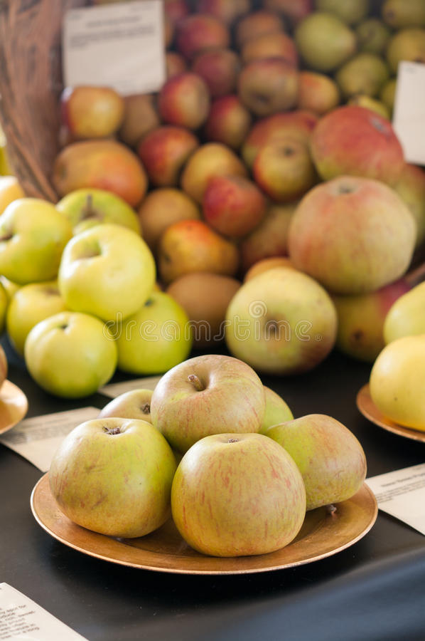 Apples - Organic Apples - Apple Show. Traditional organic apples on show stock images
