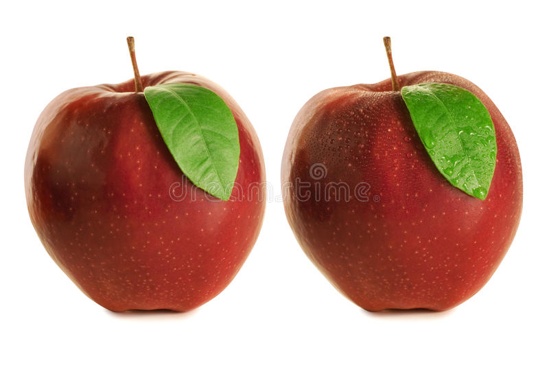 Download Apples wet and dry stock photo. Image of similar, leaf - 23462912