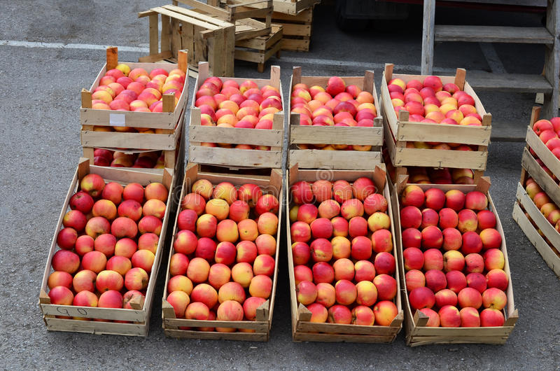 Apples in wooden crates. Fresh, organic red apples in wooden crates on wholesale market, ready for sale royalty free stock photos