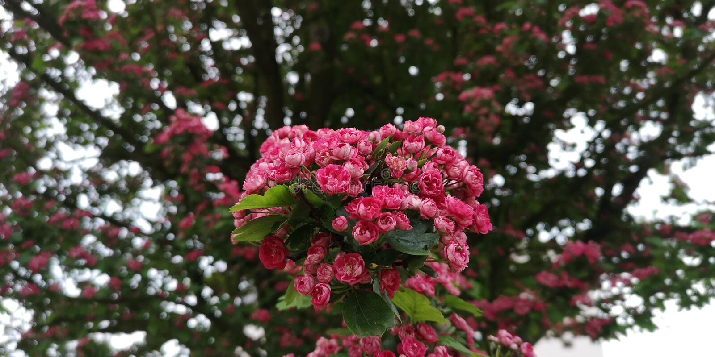 Appletree fotos de archivo