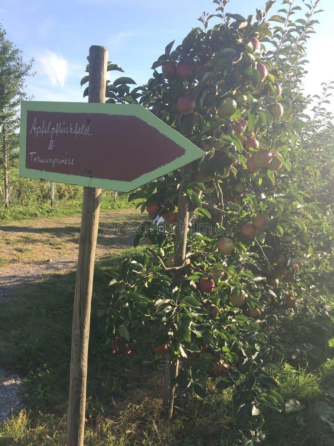 Appletrees fotografía de archivo libre de regalías