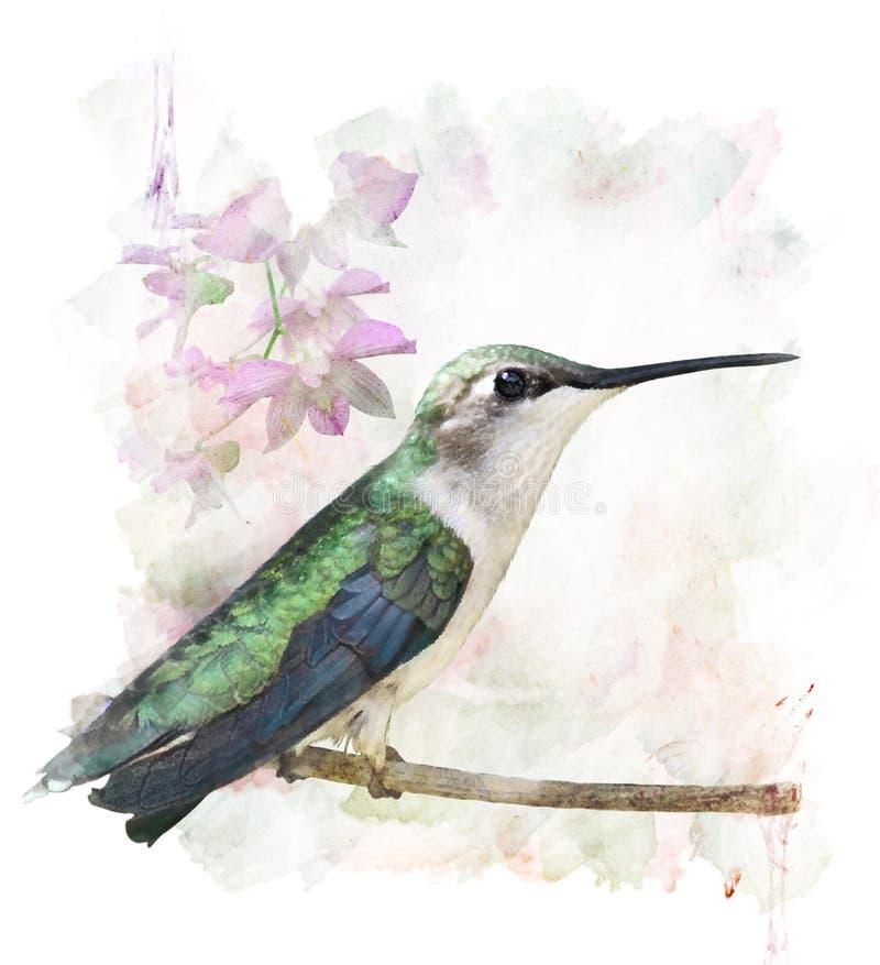 Appollaiarsi del colibrì royalty illustrazione gratis