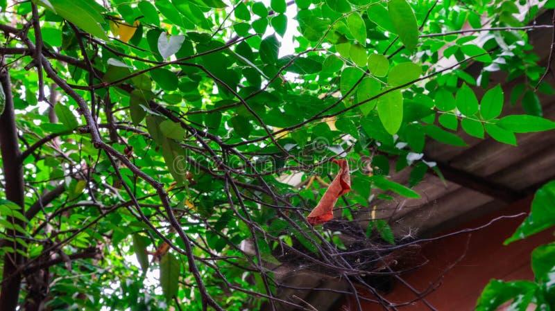 Appollaiato su un tessuto della foglia attaccato in un albero fotografia stock libera da diritti