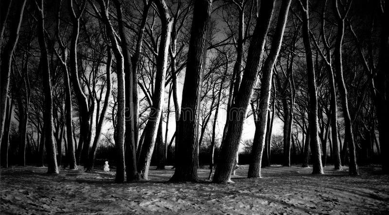 Appostandosi nella foresta fotografia stock libera da diritti