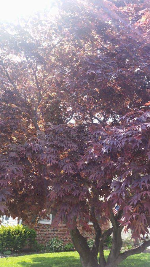 Appréciation de la façon dont le soleil apporte la couleur de cet arbre à la vie image libre de droits