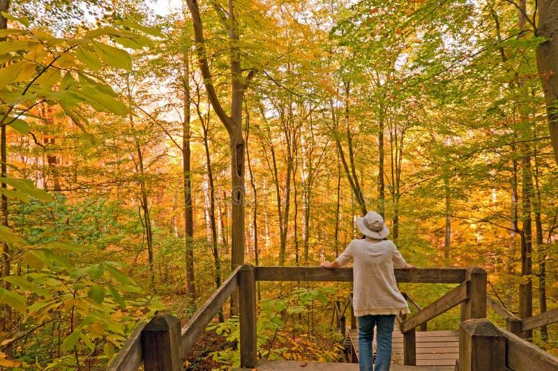 Apprécier les couleurs de l'automne dans la forêt photo stock