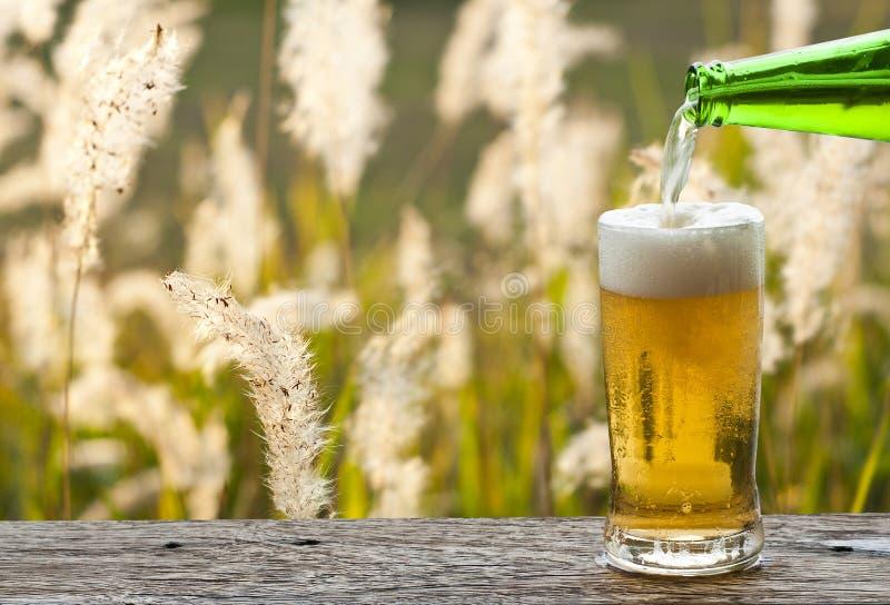 Appréciez la bière avec le paysage de pré de fleur d'herbe images libres de droits