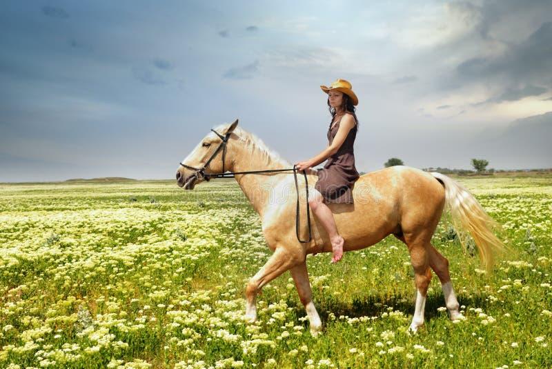 Apprivoisez du cheval photos libres de droits