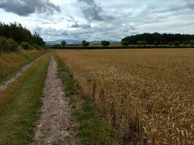 Approach to Duddo Stone Circle Megalith, Northumberland stock photos