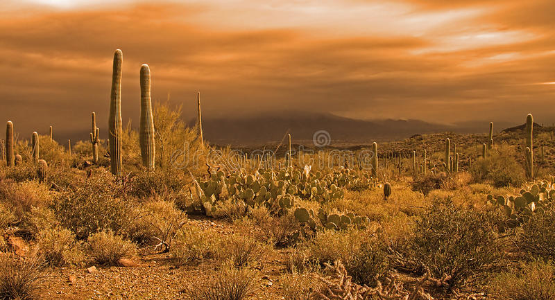 Approaching desert storm royalty free stock photo
