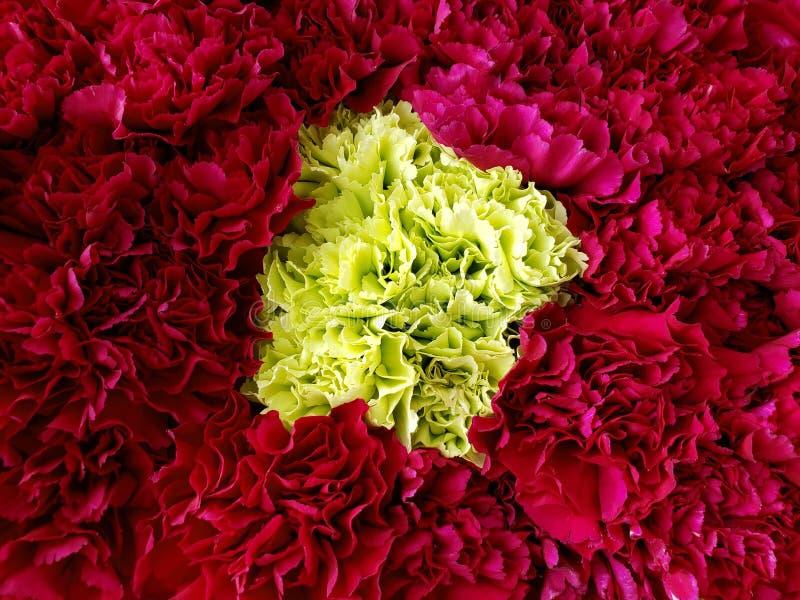 approche aux fleurs rouges et jaunes d'oeillet ? un arrangement floral, ? un arri?re-plan et ? une texture images libres de droits