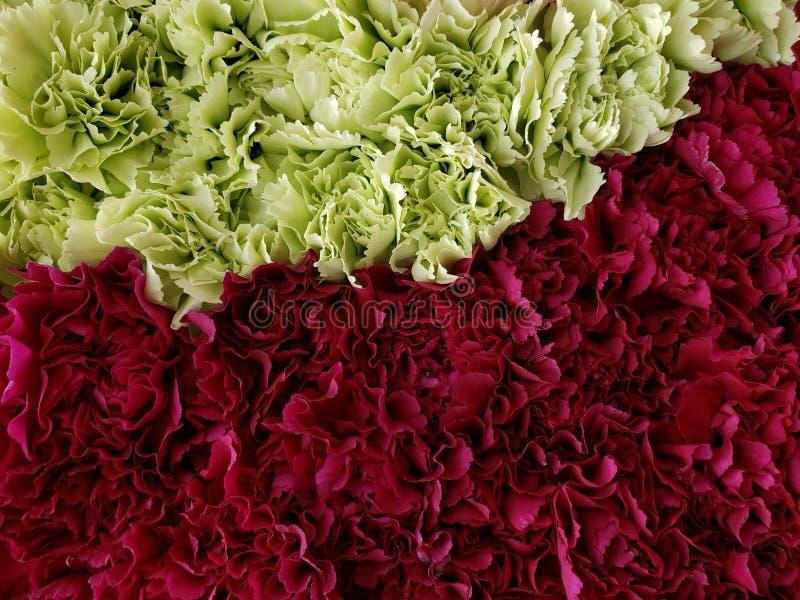 approche aux fleurs rouges et vertes d'oeillet ? un arrangement floral, ? un arri?re-plan et ? une texture image libre de droits