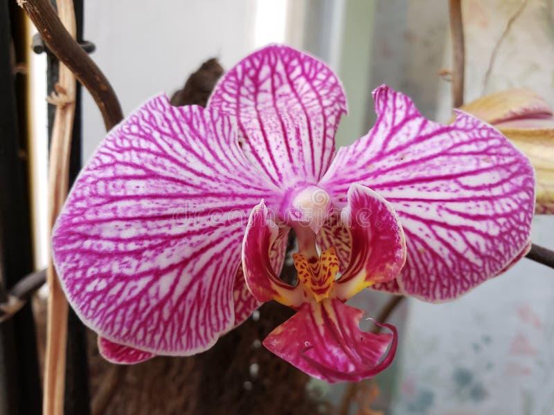 approche pour denteler la fleur d'orchidée image libre de droits