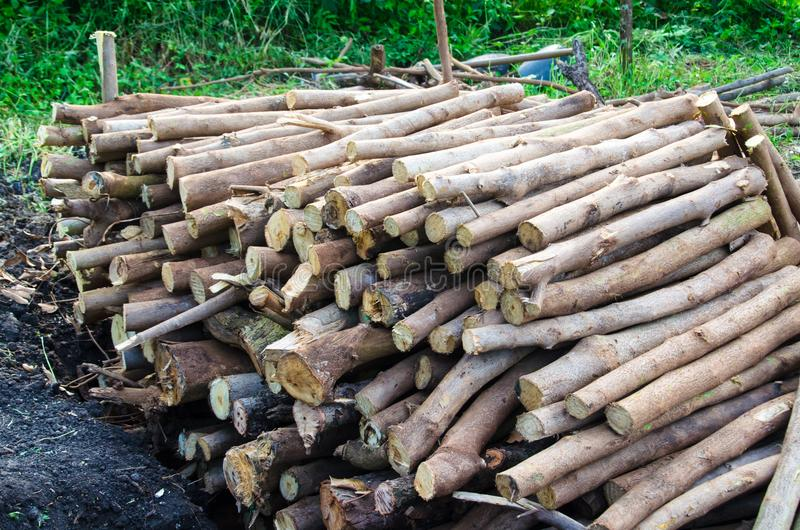 The appropriate environmental factors.Environmental factors, reasonable. Acacia wood is a sustainable environment Giants were well even in areas that are drought stock photos