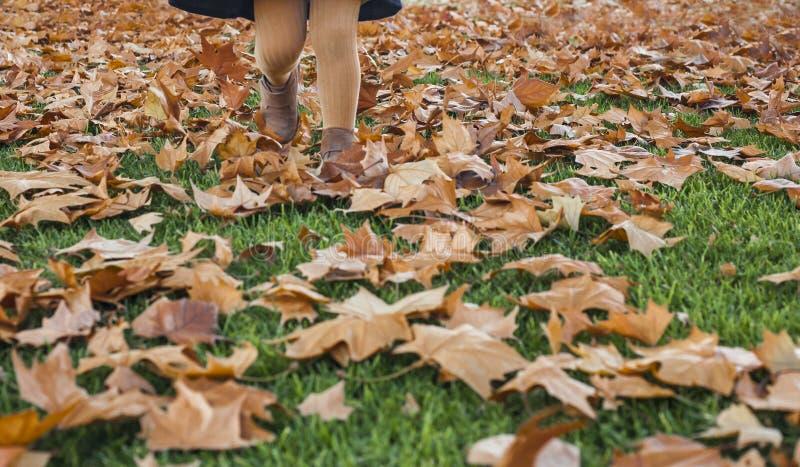 Appy mała dziewczynka bawić się z jesień liśćmi w parku obraz royalty free
