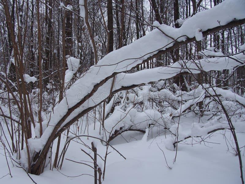 Après chutes de neige lourdes photo stock