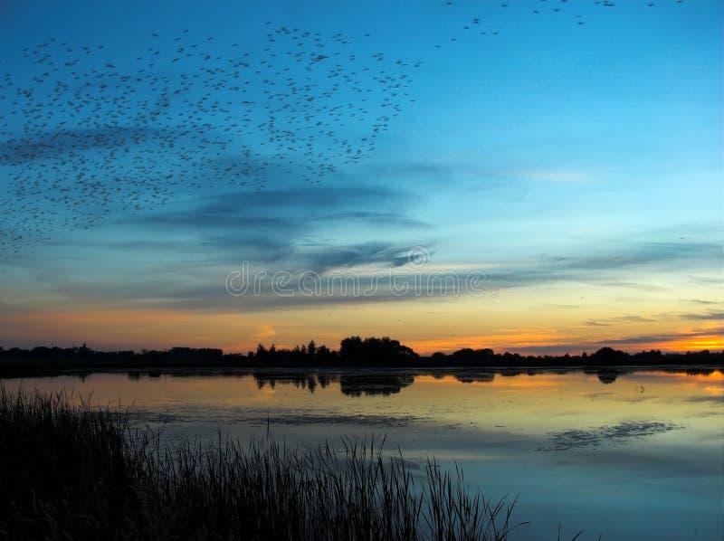 Après coucher du soleil par le lac images libres de droits