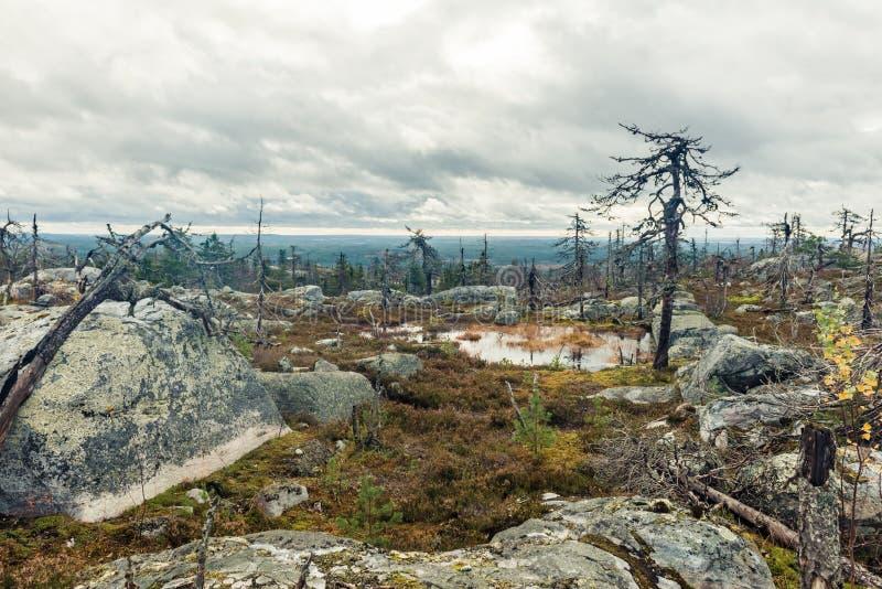 Après incendie de forêt photographie stock libre de droits