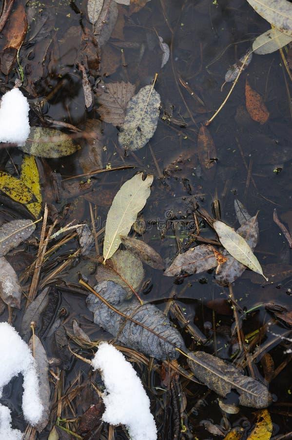 Après les premières chutes de neige photos stock