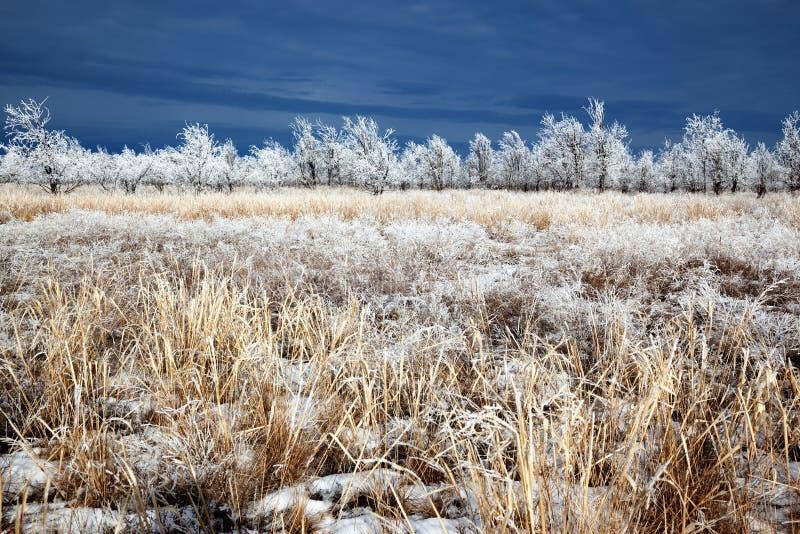 Après les premières chutes de neige photo libre de droits