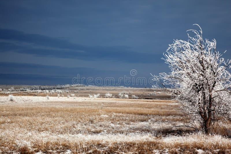 Après les premières chutes de neige images stock