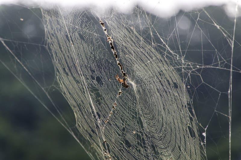 Après-midi d'araignée photographie stock libre de droits
