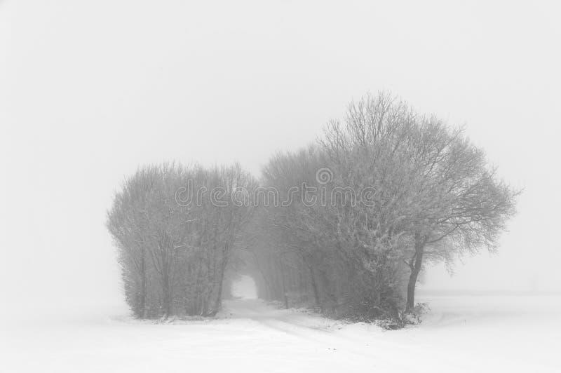 Après-midi d'hiver, tewin, Hertfordshire Bois de Milou photographie stock