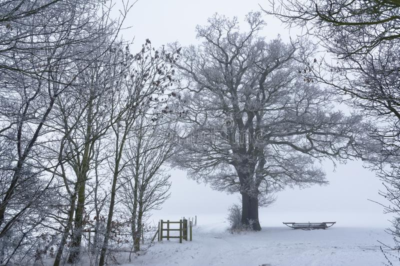 Après-midi d'hiver, tewin, Hertfordshire Bois de Milou image stock